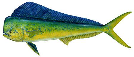 dolphin sm